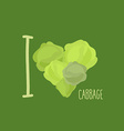 I love cabbage Heart of green cabbage vector image
