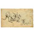 Kangaroos and Tasmanian Devil vector image