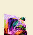 colorful english bulldog in pop art style cute vector image vector image