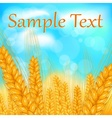 Ears of wheat field vector image vector image