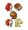 hound dogs mascot collection vector image