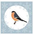 Christmas card bullfinch blue vector image vector image