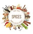 Culinary spices big set vector image