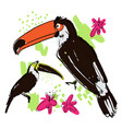 hand draw tropical birds vector image vector image