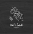 date fruit drawing dried dates sketch vector image vector image
