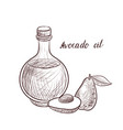 drawing avocado oil vector image vector image