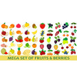 mega set of fresh fruits and berries vector image vector image