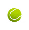 tennis ball realistic isolated vector image