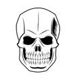 skull human skeleton vintage pirate symbol vector image