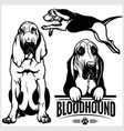 bloodhound dog - set isolated vector image vector image