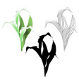 calla lily white flowers and leaves herbaceous vector image vector image