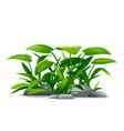 plants composition for landscape design vector image