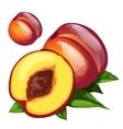 Ripe delicious round brown peach vector image