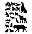 dogs detail silhouette vector image vector image
