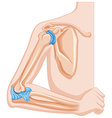 Elbow joint of human vector image vector image