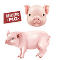 pig realistic icons set vector image vector image
