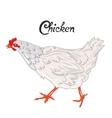 Bird chicken hen vector image vector image