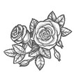 hand drawn romantic flower or vintage rose vector image