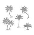 palm trees sketch isolated exotic rainforest vector image