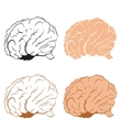 set brains vector image