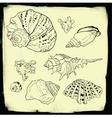 set hand drawn seashells vector image vector image