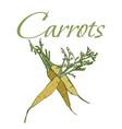 tasty veggies carrots vector image vector image