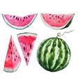 Watercolor watermelon vector image