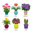 indoor garden plants and flowers vector image
