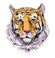 Artwork tiger sketch drawing vector image vector image