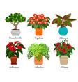 house flowers and indoor flowerpots vector image vector image