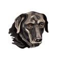 labrador retriever head vector image vector image