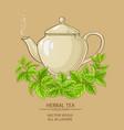melissa herbal tea vector image vector image