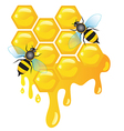 Worker bees on honey cells with honey dripping vector image