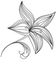 Abstract beautiful flower of lily vector image