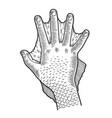 hand amphibian man sketch engraving vector image vector image