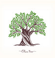 hand-drawn olive sketch vector image vector image