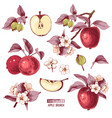 apple fruit set hand drawn colorful vector image vector image