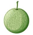 Fresh melon on white background vector image