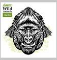gorilla head - symmetric front face graphic vector image vector image