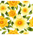 seamless background with yellow daffodil narcissus vector image