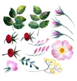 Set of watercolor elements rosehip vector image vector image