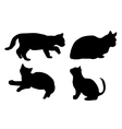 Silhouette of the cat vector image vector image