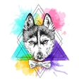 sketch husky vector image vector image