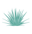 agave tequilana - blue - side view