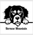 bernese mountain - peeking dogs - - breed face vector image vector image