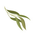branch with green leaves floral design element vector image