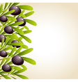 green olive branches and black olives vector image vector image