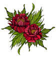 hand drawn peonies sketch style floral design vector image vector image