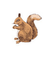 hand drawn squirrel vector image vector image