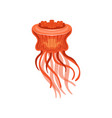 jellyfish chrysaora hysoscella species of vector image vector image
